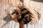 hornissen-018-3728.jpg